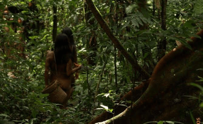 Bosques Amazonía