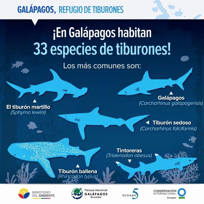 Galápagos tiburones 1