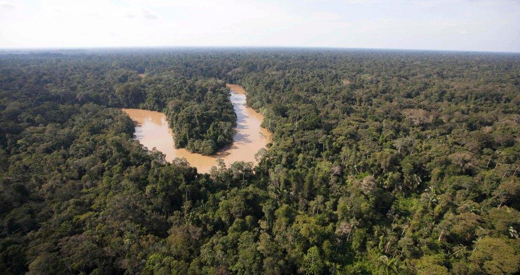 Una declaratoria conjunta de organizaciones, líderes indígenas y expertos exige a los Estados garantizar la protección y supervivencia de estos grupos, que se refugian en los bosques amazónicos y del Gran Chaco. Fue difundida durante el III Congreso de Áreas Protegidas de Latinoamérica y El Caribe, en Lima, Perú.
